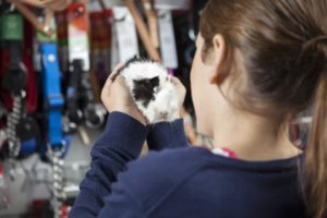 58051808 - rear view of girl holding cute guinea pig at pet store